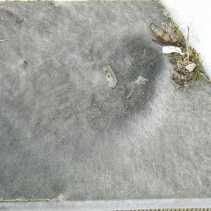OEM Air Filter Yuck Closeup 2004 Jetta